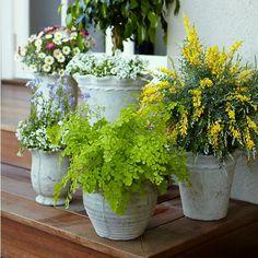 Mosquito-Repelling Potagerie  Choose the right trio of plants around your yard, patio, etc... (geranium, citronella, and catnip)