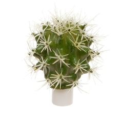 Cactus Ball Succulent Green (6cmDx9cmH) 47866GR ($3.87) ❤ liked on Polyvore featuring home, home decor, floral decor, cactus home decor, floral home decor, fake plants and faux plants
