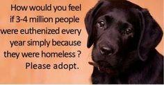 adopt, adopt, adopt!!!