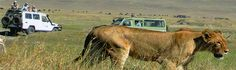Planning on booking a  #SafariHolidayInKenya  that's with family friendly? For more check out @ http://www.kenya-safaris.co