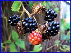 Image result for autumn hedgerow berries