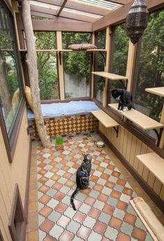 """What's a """"catio"""" and why would you want one? A catio is an outdoor enclosed patio for cats (and sometimes their caregivers), where they can enjoy the sights, sounds, and smells of… Diy Cat Enclosure, Outdoor Cat Enclosure, Pet Enclosures, Reptile Enclosure, Outdoor Cat Tree, Cat House Outdoor, Cat Cages, Cat Run, Cat Towers"""