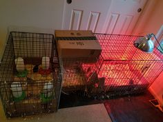 Learn how to extend your brooder using two wire dog crates