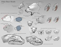 ✤ || CHARACTER DESIGN REFERENCES | 解剖 • علم التشريح • анатомия • 解剖学 • anatómia…