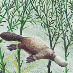 Platypus, Children's Book Illustration, Childrens Books, Art For Kids, Totes, Fish, Knitting, Crafts, Animals