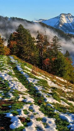 Landscape - First snow.
