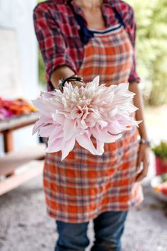 "Flaunt your flowers! Some of Erin's favorite ""showier"" dahlias include Cafe au Lait (below), September Morning, and Gitty Up.​"