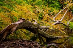 fall is coming Fall Is Coming, Travel Around, Bald Eagle, Universe, Bird, Nature, Animals, Animales, Animaux