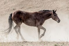 dusty trail.  Print available.  Portion of proceeds to www.returntofreedom.org