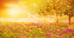 Les 6 promesses du psaume 34