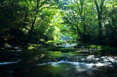 """Brilliant Green Forest"" by Junya Hasegawa, via 500px."