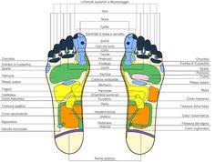 Riflessologia plantare, mappa