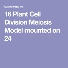 16 Plant Cell Division Meiosis Model Mounted on 24 x18 Base