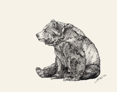 I want to get a bear tattoo. But it's hard to find a drawing that captures what I associate with it. This one's nice, but I can imagine it would be quite hard to tattoo. (via Bear // Graphite Stretched Canvas by Sandra Dieckmann Art D'ours, Sandra Dieckmann, Bear Signs, Graphite Art, Graphite Drawings, Pencil Drawings, Bear Drawing, Drawing Girls, Bear Art
