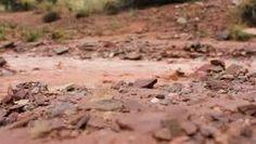 muddy river - Google Search