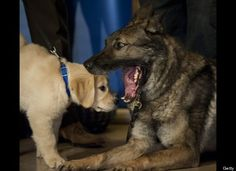 Dog Dental Care: 8 Tips For Taking Care Of Your Dog's Teeth