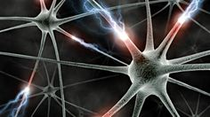 Neural transplantation to repair brain damage may soon be possible in humans [Neuroscience News: http://futuristicnews.com/tag/brain/ Neuroscience Books: http://futuristicshop.com/category/neuroscience-books-neurotechnology-books/]