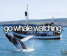 Go whale watching. Bucket list
