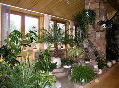 گلخانه داخل منزل - Google Search