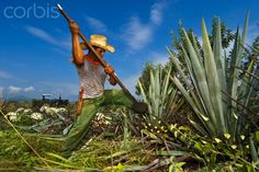 México protege al tequila para evitar la competencia desleal