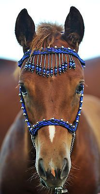Hand Braided Miniature Show Halter, Horse Tack, BLACK / ROYAL BLUE --NEW!