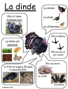 Nature Animals - Welcome my homepage Nature Animals, Animals For Kids, Farm Animals, Animals And Pets, How To Speak French, Learn French, French Education, French Classroom, French Resources