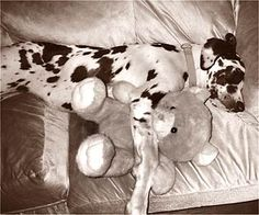 Great Dane Info | Dog Training Minnetonka, MN