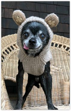 Frankie and his Sock Monkey Sweater – Harley's Dream