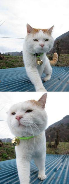 cat walk~