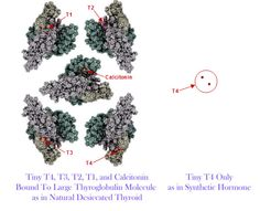 New chemical analysis showing important difference between NDT and T4-only! - Stop The Thyroid Madness