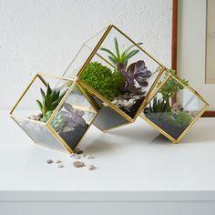 How do I make an amazing terrarium?