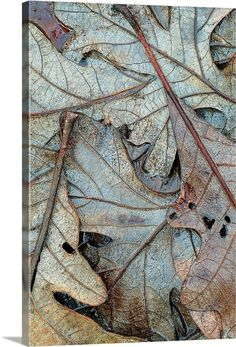 Soft Autumn, Autumn Leaves, Oak Leaves, Blue Leaves, Fallen Leaves, Autumnal, Plant Leaves, Patterns In Nature, Textures Patterns