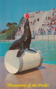 CA - SEAL CIRCUS TIME MARINELAND OF THE PACIFIC - UNUSED ... - bidStart (item 31499175 in Postcards... Amusment Parks (non-Disney))