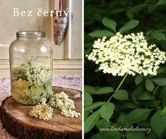 Bez černý květ Edible Plants, Glass Vase, Health, Decor, Fitness, Recipes, Syrup, Decoration, Health Care