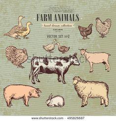 Farm animals vintage collection, cow, pig, goat, sheep, chicken, duck, goose, turkey rabbit hand drawn farm animals vector