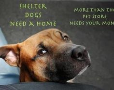 Dogs need a home... give them one
