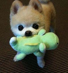 OMG! Adorable.