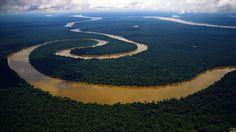 Sobrevolando la Amazonia peruana, una de las áreas con mayor biodiversidad y especies únicas del planeta.