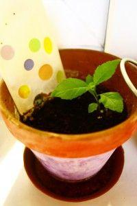 Bei dem Tütchen 1 bin ich gar nicht sicher, ob da etwas aus dem Samen wächst, den ich eingepflanzt hatte, oder ob sich da etwas eingemogelt hat. Lifestyle Blog, Planter Pots, Seeds