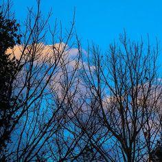 【take3_fu】さんのInstagramをピンしています。 《#明石 #公園 で撮った #木 。🌿 ➖➖➖➖➖➖➖➖➖➖➖➖ #森 #林 #葉 #幹 #wood #forest #leaf #緑  #green #park #nature #自然 #leaf #walka #hungrylittletravellers #空 #雲 #sky #tree #cloud #blue》