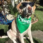 Rover dogs are happy to be home when owner is away. When you need a dogsitter, save $20 using coupon code: LIMITEDTIME20. Check me out at: https://www.rover.com/sit/hookedonpets