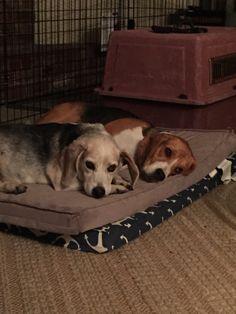 Franco & Gino cuddling