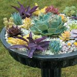Spectacular Container: Plants a variety of succulents in an ornate bird bath that features a layer of white rocks on top. Planting guide included.
