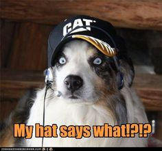 dogs like john deere Funny Animal Pictures, Dog Pictures, Funny Animals, Cute Animals, Funniest Animals, Crazy Animals, Animal Pics, Wild Animals, Raining Cats And Dogs