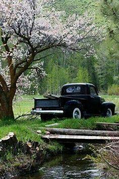 Purple flowering tree with old pickup truck Old Pickup Trucks, Farm Trucks, 4x4 Trucks, Lifted Trucks, Jeep Pickup, Country Trucks, Diesel Trucks, Lifted Chevy, Custom Trucks