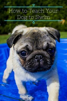 Dog Trainer: Dog Training Tips & Tricks: Not all pups are born knowing how to swim! Teach you… – Sam ma Dog Training Training Your Puppy, Dog Training Tips, Potty Training, Training Classes, Training Schedule, Crate Training, Training Videos, Agility Training, Training School