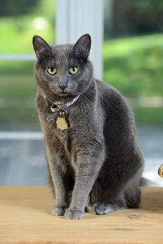 Is your cat avoiding the litter box? It may signal a problem with her health...