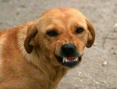 dog-763058_640