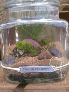 Seaside terrarium.. gift for friends