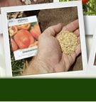 Win 5 Years Worth of Vegetable Seeds from Mike the Gardener